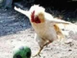 Птичий грипп в период депрессии