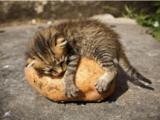 Дубль: президентская картошка